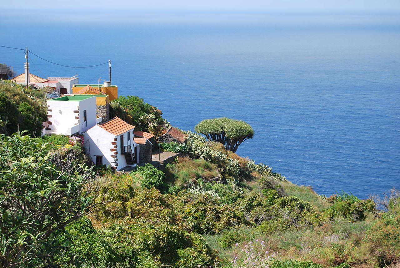 Aloe Verde La Palma Het Groene Canarische Eiland